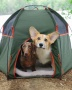 I Will Prepare Your Dog for Camping or Hiking for $200